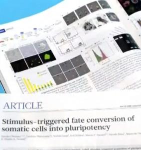 약산성에서 체세포가 만능세포로 분화가능?