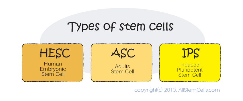 types_of_stem_cells
