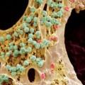 After death, your stem cells could still save lives