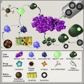 Immunoengineering: How Nanotechnology Can Enhance Cancer Immunotherapy